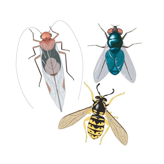 Insekten fliegen kakerlake biene Premium Vektoren