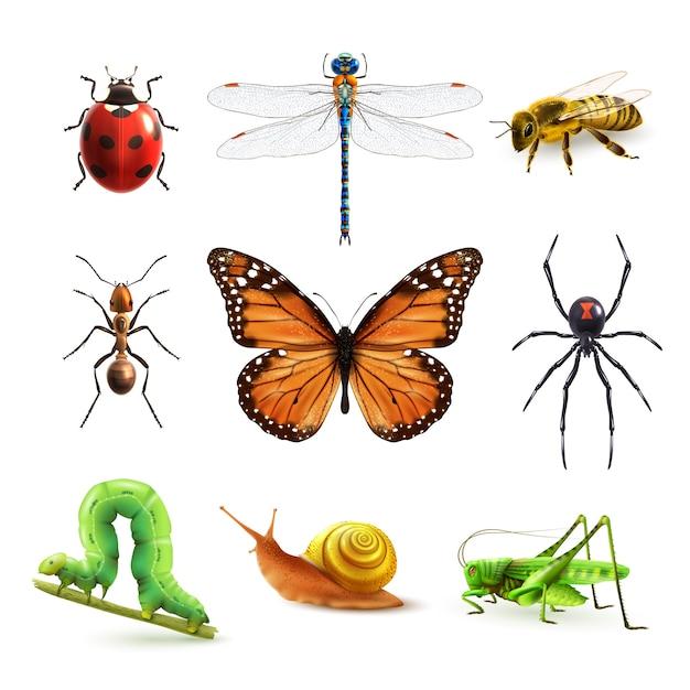 Insekten realistisch gesetzt Kostenlosen Vektoren