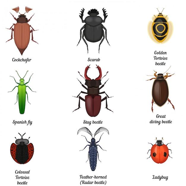 Insektenwanzenikonen eingestellt Premium Vektoren