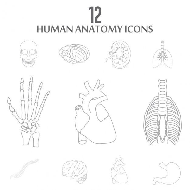 Interne menschliche Organe Gliederung Icon-Set   Download der ...