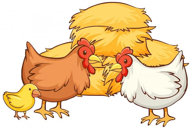 Isolierte hand gezeichnet von hühnern und heu Kostenlosen Vektoren