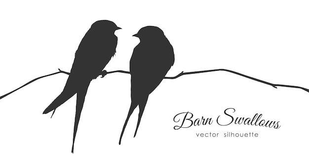 Isolierte silhouette von zwei scheunenschwalben, die auf einem trockenen zweig auf weißem hintergrund sitzen. Premium Vektoren