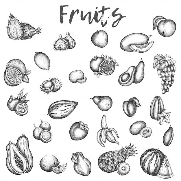 Isolierte skizzen von früchten. apfel- und melonen-, avocado- und kiwi-skizze von vinage vektorikonen der pflaumen-, pfirsich- und mangofrucht hand gezeichneten frucht Premium Vektoren