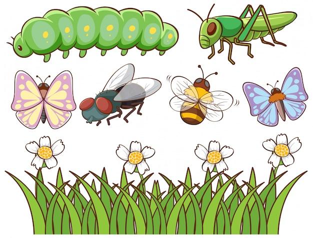 Isoliertes bild verschiedener insekten Kostenlosen Vektoren