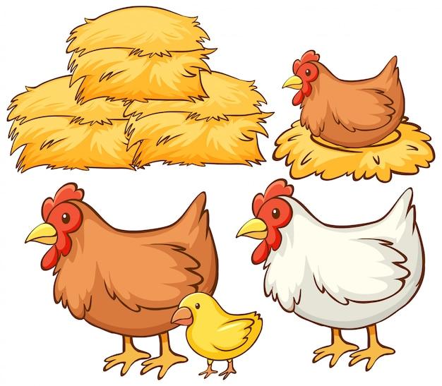 Isoliertes bild von hühnern und heu Kostenlosen Vektoren