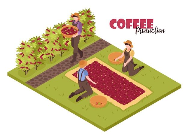 Isometrisches kaffeeproduktionsweiß mit den betriebsbüschen und -leuten, die bohnen mit editable aufwändigem text sammeln Kostenlosen Vektoren