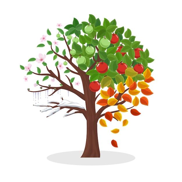 Jahreszeitenbaum. frühling sommer herbst und winter, blattpflanze, schnee und blume, vektorillustration Kostenlosen Vektoren