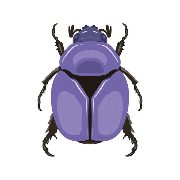 Käfer. draufsicht. kann als insektensymbol verwendet werden. Premium Vektoren
