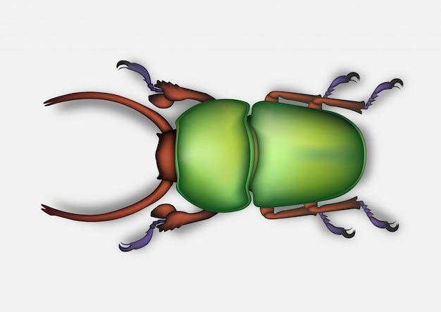 Käfer zeichnung realistisch Premium Vektoren