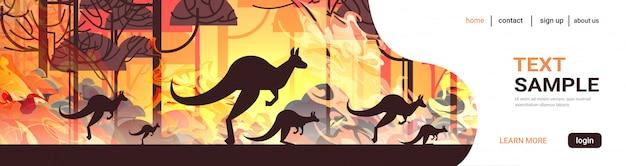 Känguru läuft von waldbränden in australien tiere sterben in lauffeuer busch feuer brennenden bäumen naturkatastrophe konzept intensive orange flammen horizontal Premium Vektoren