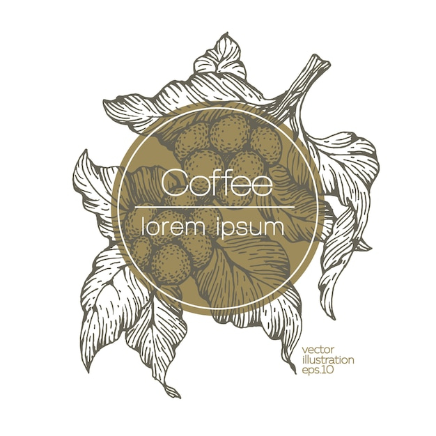 Kaffeebohnen-vektorillustration. Premium Vektoren