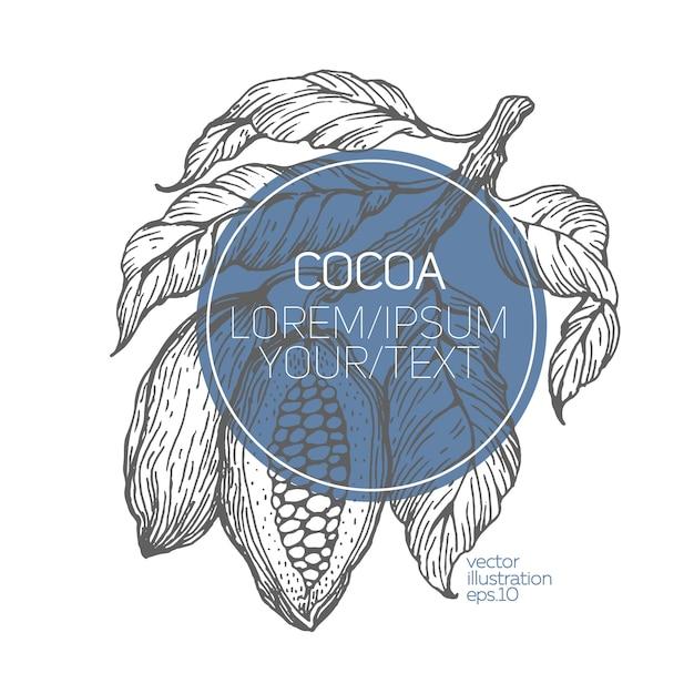 Kakaobohnen-vektorillustration. Premium Vektoren