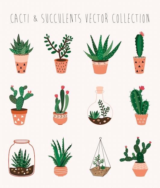 Kakteen- und succulentsvektorsammlung mit zwölf dekorativen houseplants Premium Vektoren