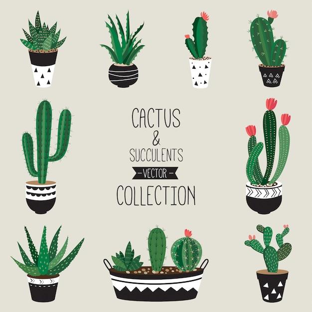 Kakteen und sukkulenten vektor-sammlung set von neun dekorativen zimmerpflanzen Premium Vektoren