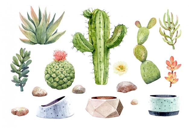 Kaktus kakteen succulent und stein mit baumtopf. Premium Vektoren
