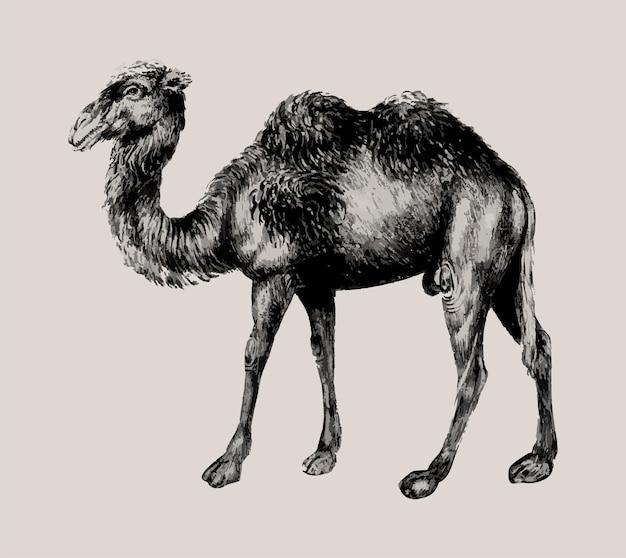 Kamel im vintage-stil Kostenlosen Vektoren