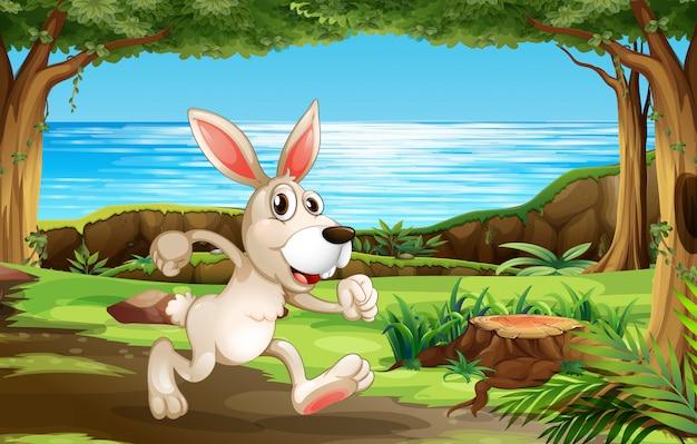 Kaninchen, das in den park läuft Kostenlosen Vektoren