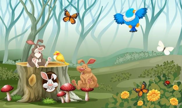 Kaninchen und vögel, die im wald leben Kostenlosen Vektoren