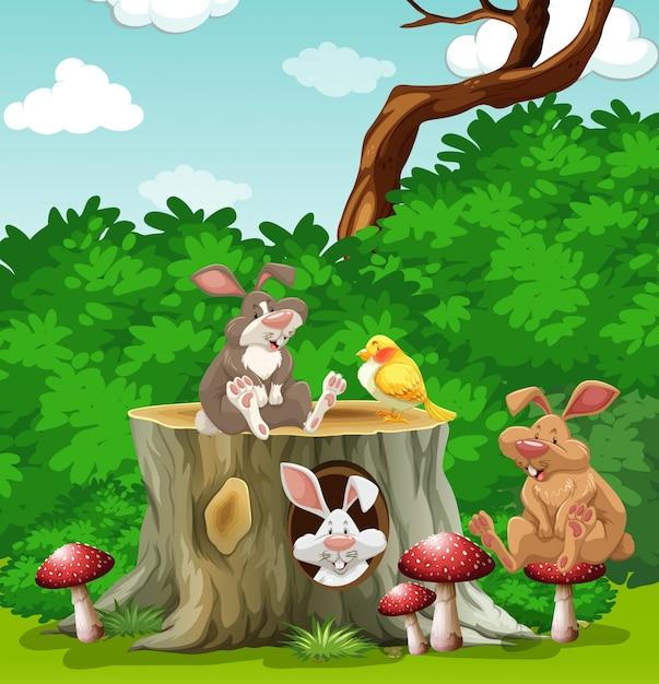 kaninchen und vogel im garten illustration download der. Black Bedroom Furniture Sets. Home Design Ideas