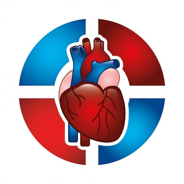 Kardiologiedesign über weißer hintergrundvektorillustration Premium Vektoren