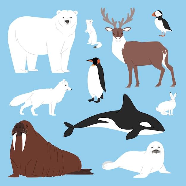 Karikatur eisbär oder pinguin-zeichensammlung der arktischen tiere mit walrentier und robbe in der verschneiten winterantarktis-setillustration Premium Vektoren