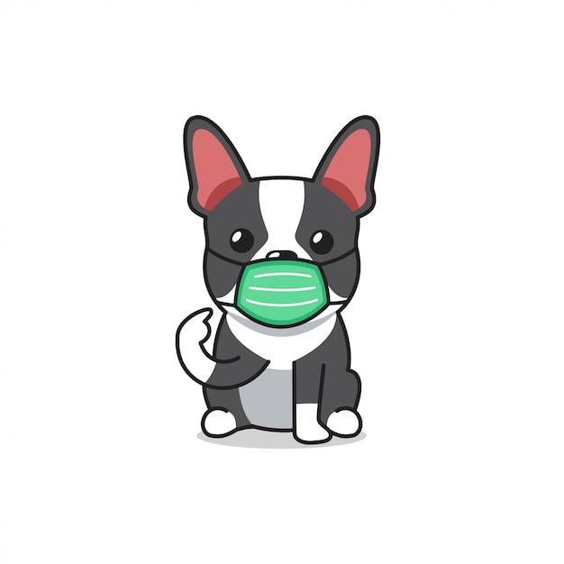 Karikaturcharakter boston terrier hund, der schützende gesichtsmaske trägt Premium Vektoren