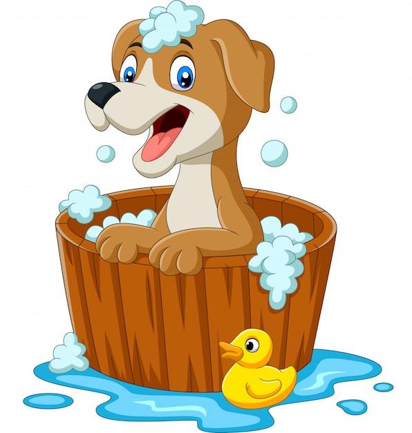 Karikaturhund, der ein bad hat Premium Vektoren