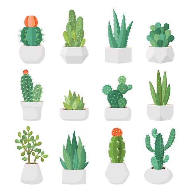 Karikaturkaktus und -succulents in den töpfen eingestellt Premium Vektoren