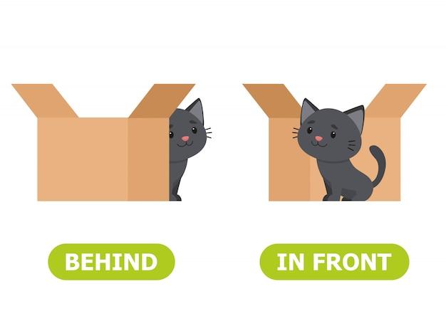 Katze steht vor der kiste und hinter der kiste Premium Vektoren