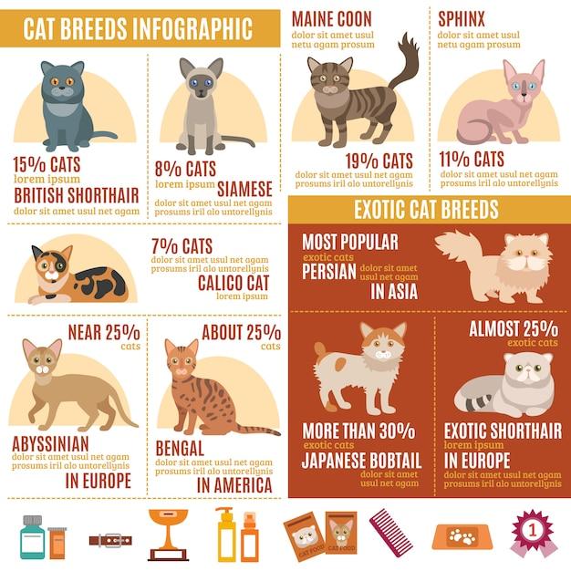 Katzen infografiken gesetzt Kostenlosen Vektoren