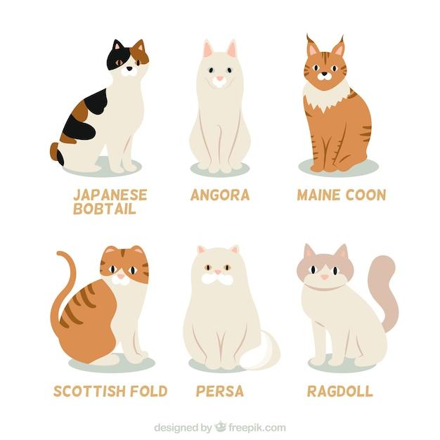 Katzenzucht-sammlung Kostenlosen Vektoren