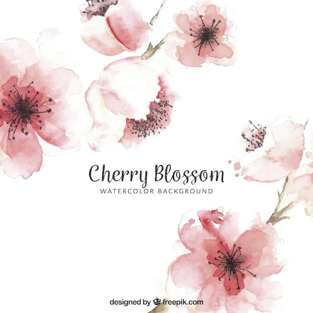Kirschblütenhintergrund in der aquarellart Kostenlosen Vektoren