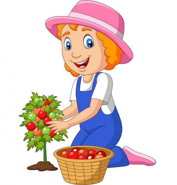 Kleines mädchen der karikatur, das tomaten erntet Premium Vektoren