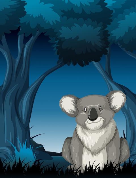 Koala in der nachtaufnahme Kostenlosen Vektoren