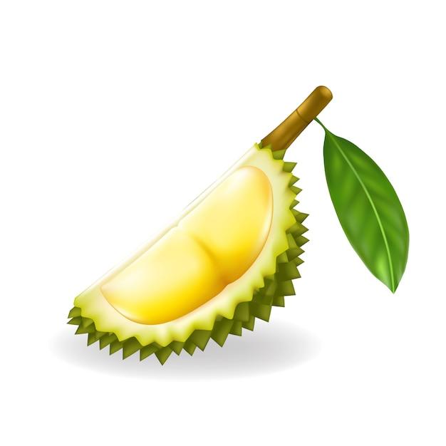 König der früchte, durianillustration Premium Vektoren