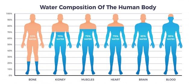 Körper- und wassertabelle mit wasserzusammensetzung des menschlichen körpers, flache vektorillustration Kostenlosen Vektoren