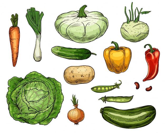 Kohl, karotten, zwiebeln, kartoffeln, pfeffergemüse Premium Vektoren