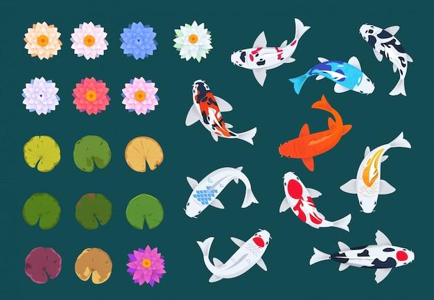 Koi fisch und lotus. japanische karpfen, blüten und blätter von seerosen. Premium Vektoren