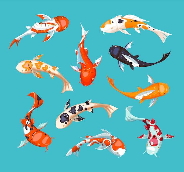 Koi-karpfen. koi japanische fischillustration. chinesischer goldfisch. koi-symbol des reichtums. aquarium illustration. fisch nahtloses muster. Premium Vektoren