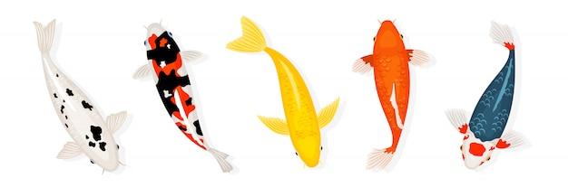 Koi karpfenfische illustration. japanischer koi-fisch auf weißem hintergrund Premium Vektoren