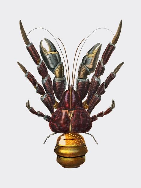 Kokosnusskrebs (birgus latroi) illustriert von charles dessalines d orbigny (1806-1876). Kostenlosen Vektoren