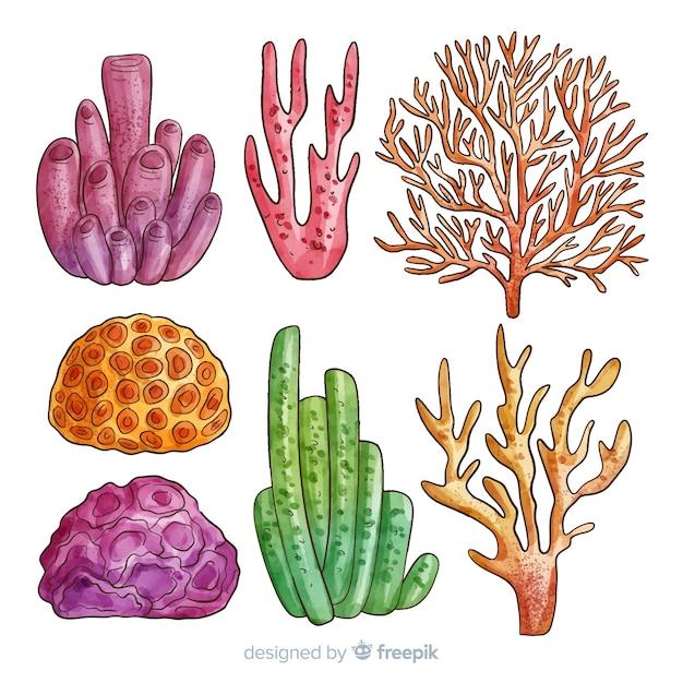 Korallensammlung Kostenlosen Vektoren