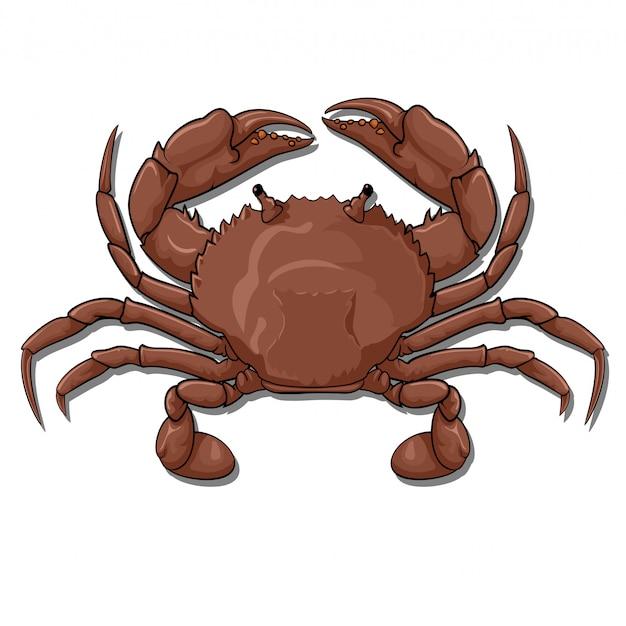 Krabbe, ansicht von oben Premium Vektoren