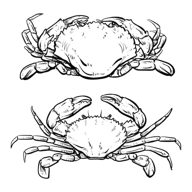 Krabbenzeichnung auf weißem hintergrund Premium Vektoren