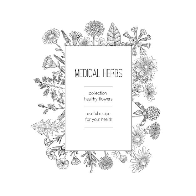 Kräuterrahmen. kräuterhintergrundentwurf für handgezeichnete schablone des medizinischen konzeptnaturkräuter der spa-pflanzenpflanzen. illustration kräuter medizinische, natürliche organische kräuter Premium Vektoren