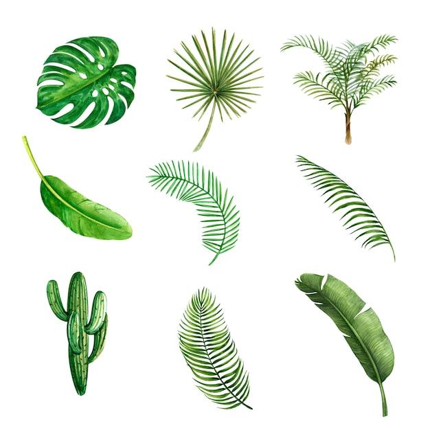 Kreatives element des tropischen betriebsaquarells, vektorillustrationsdesign. Kostenlosen Vektoren