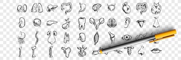 Kritzelset für menschliche organe. sammlung von handgezeichneten skizzenschablonenmustern der männlichen weiblichen leberherz-lungen-nierenlippenzungennasenaugen auf transparentem hintergrund. anatomische körperteilillustration Premium Vektoren