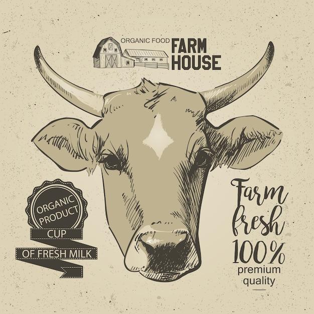Kühe kopf hand gezeichnet in einer grafischen art. weinlesevektor-stichillustration Premium Vektoren
