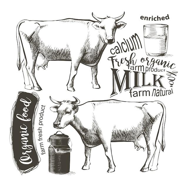 Kuh in der grafischen weinleseart, handzeichnungs-vektorbild. Premium Vektoren