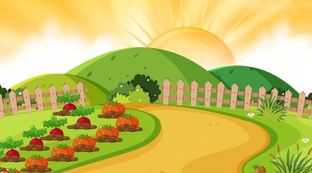 Landschaftshintergrund des gemüsegartens bei sonnenuntergang Premium Vektoren